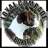 The Loyal Comrade Boxers Store