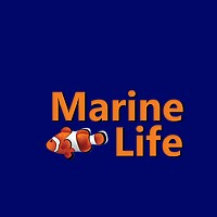 The Marine Life Store for Fish Products